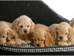 Forbereder dit hjem til en ny hund (Kilde: Petworld.dk)