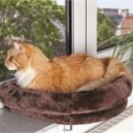 Der er ikke noget så hyggeligt som en kat i sin katteseng (foto petworld.dk)