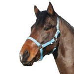 Heste og ride udstyr (foto: